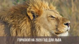 Horoscope 2020 pour Leo