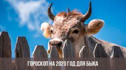 Horoscope 2020 pour le taureau