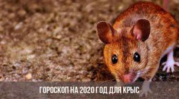 Horoscope 2020 pour le rat