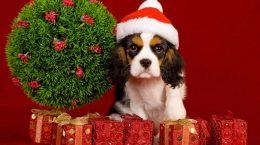 chien dans un bonnet rouge parmi les cadeaux