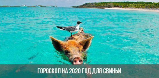 Horoscope 2020 pour le cochon