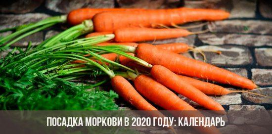 Planter des carottes en 2020