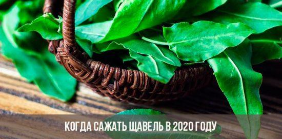 Quand planter de l'oseille en 2020